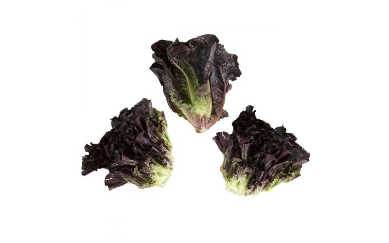 Little Red Gem Lettuce