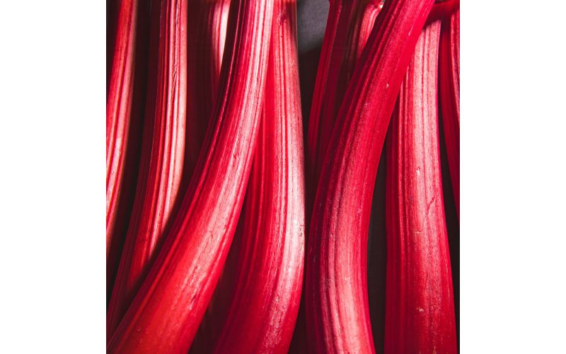 Washington Fancy Rhubarb