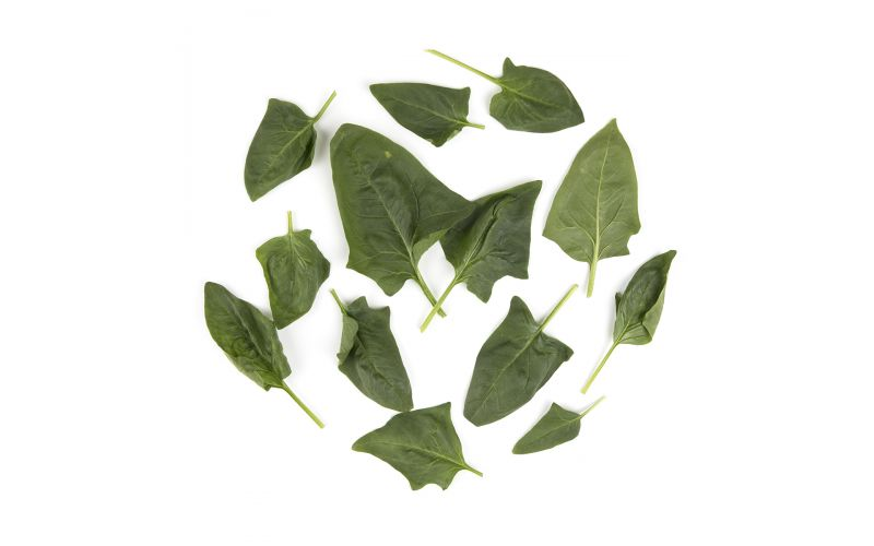 Organic Smooth Leaf Spinach