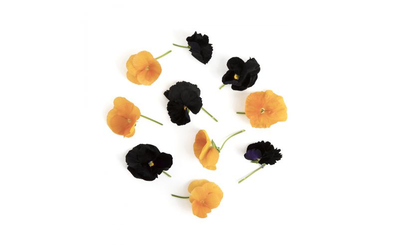 Halloween Pansy Mix