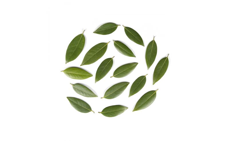Wild Bay Leaves