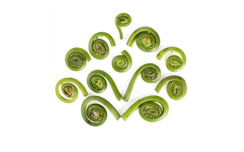 Eastern Fiddlehead Ferns