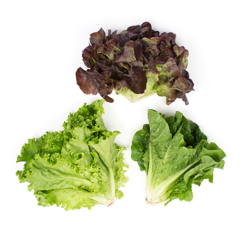 Norwich Meadows Organic Young Mixed Lettuce Heads