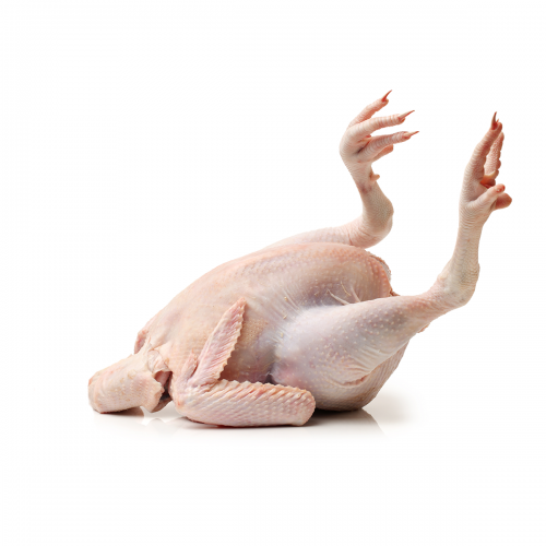 ABF Halal Whole Neck and Feet On Chicken | Meat & poultry